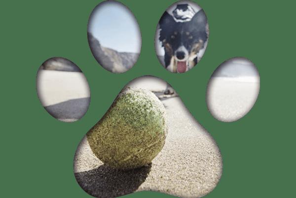pies bawiącysię piłką