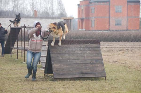 Szkolenie psów 10