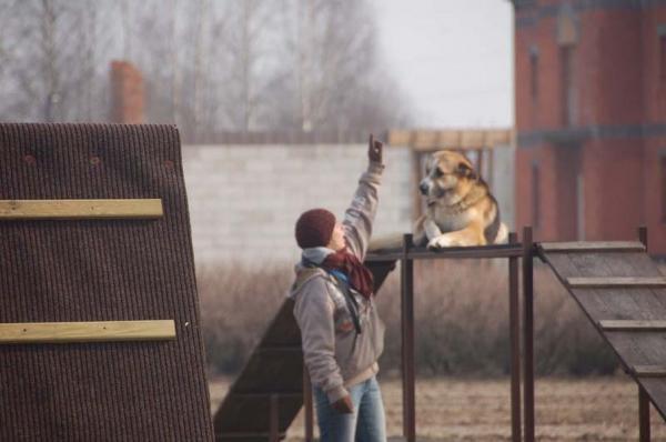 Szkolenie psów 11