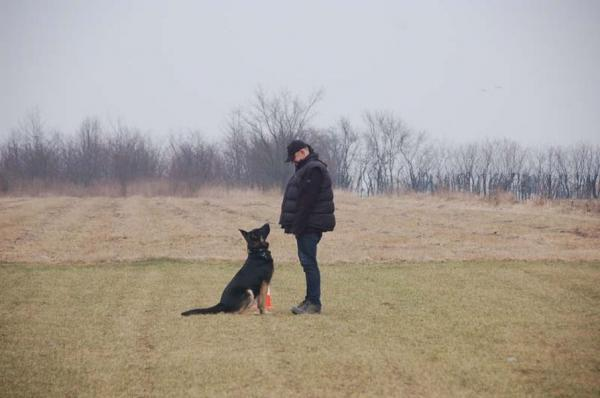 Szkolenie psów 12