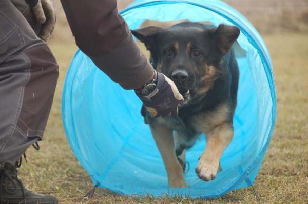 Szkolenie psów 13