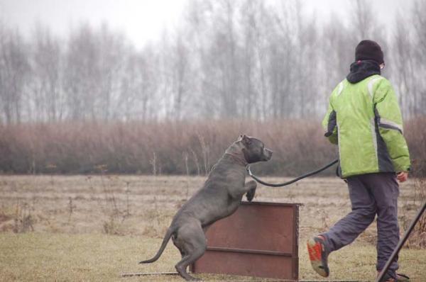 Szkolenie psów 14