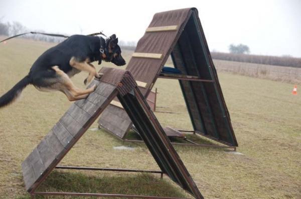 Szkolenie psów 15
