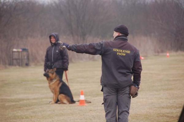 Szkolenie psów 17