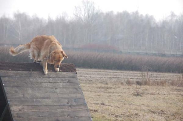 Szkolenie psów 18