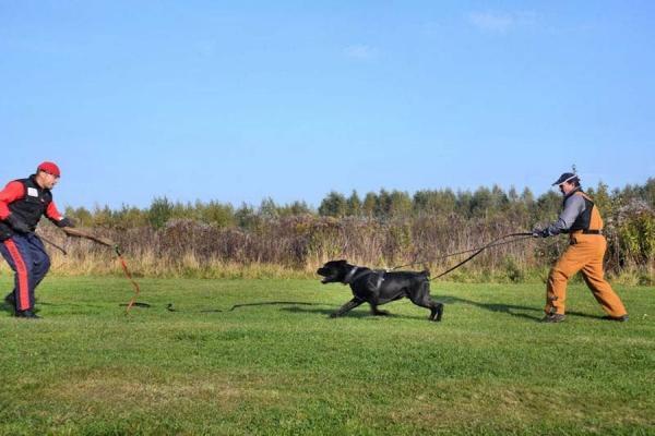 Szkolenie psów Ares 1