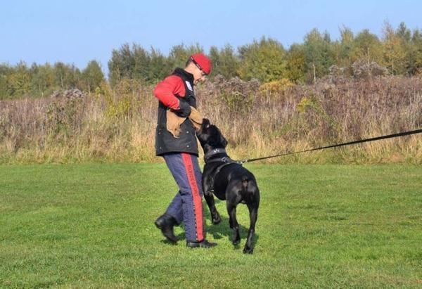 Szkolenie psów Ares 10