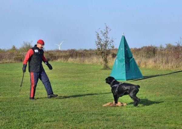 Szkolenie psów Ares 11
