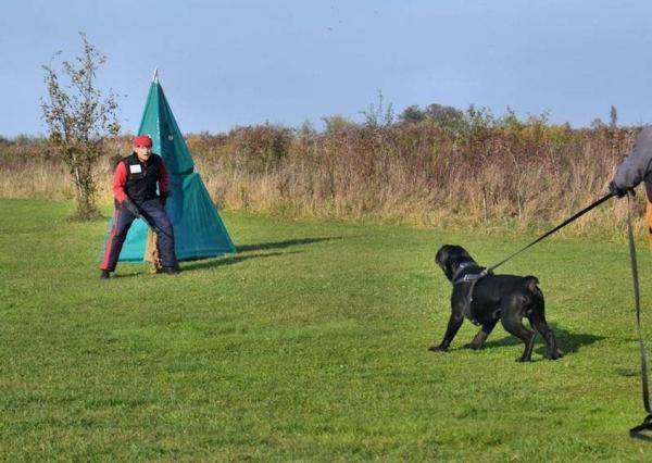 Szkolenie psów Ares 12