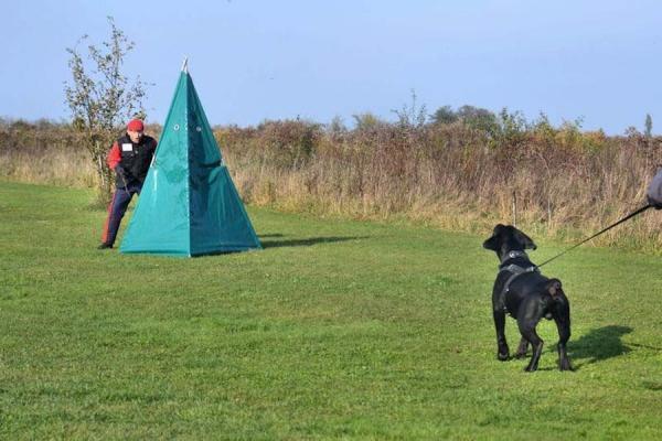 Szkolenie psów Ares 13