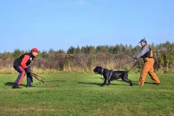 Szkolenie psów Ares 2