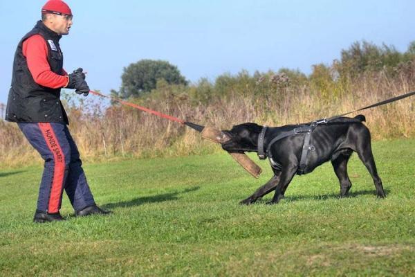 Szkolenie psów Ares 4