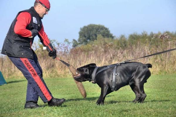 Szkolenie psów Ares 5