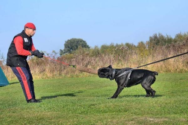Szkolenie psów Ares 6