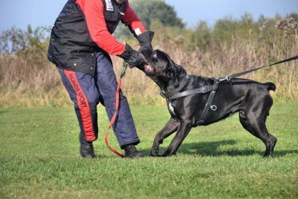 Szkolenie psów Ares 7