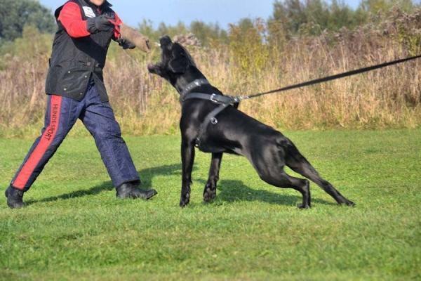 Szkolenie psów Ares 8