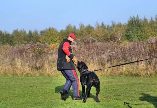 Szkolenie psów Ares 9