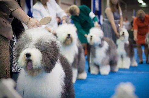 szkolenie psów 2