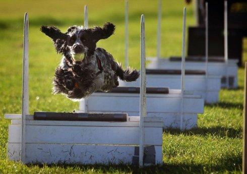 szkolenie psów 3