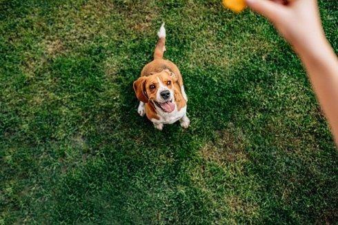 szkolenie psów 4