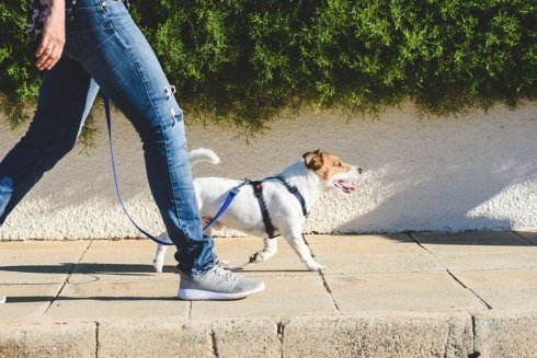 szkolenie psów 5