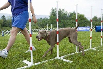 szkolenie psów 7