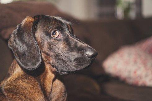 szkolenie psów 8